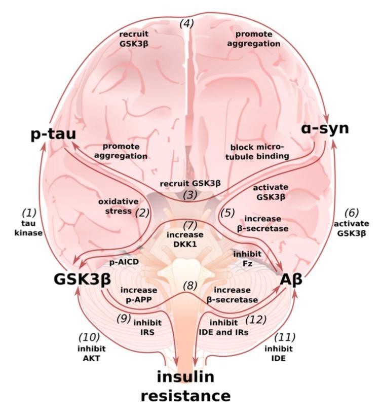 Multi-loop model of Alzheimer disease